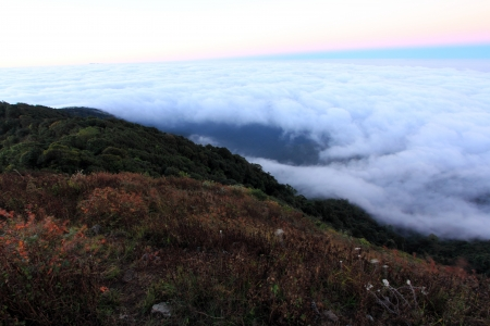 The sea of fog at Doi Pha Hom Pok National Park 2 photo