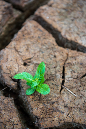 reborn: Living with Drought, Reborn tree, cracked ground