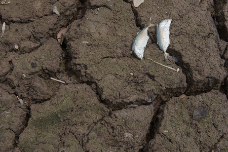 dead fish: Dead fish, dry land, World Disaster, Cracked ground background
