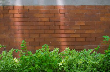 adorned: Brick walls adorned with leaves and tree wallpaper.