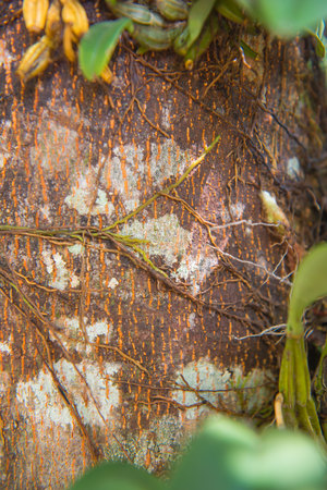 absorb: parasite plant living and plant growing on trees in forest