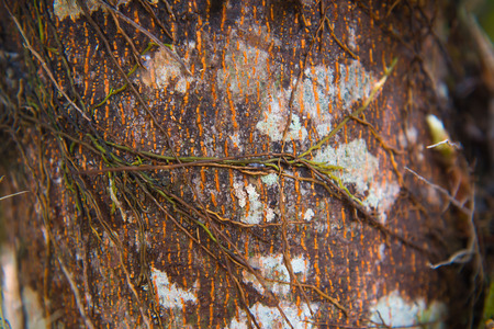 parasite: parasite plant living and plant growing on trees in forest