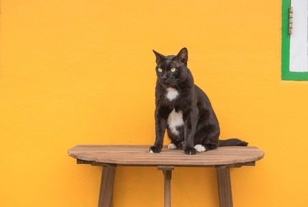Black cat on a wooden table and Yellow background . Stock Photo