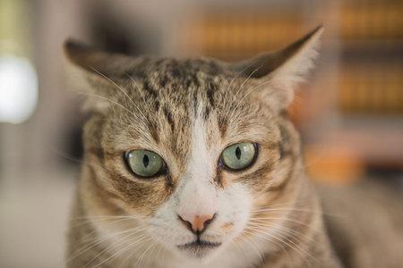 Cat portrait close up, Cute kitten .