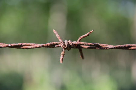 Old barbed wire and rust  and  green background.