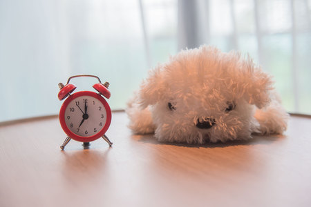 seconds: a alarm clock with cute white dog  doll on the wooden table and white curtains in the morning .