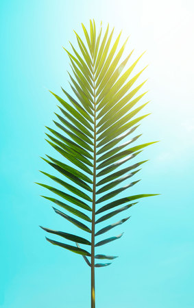 Green leaf of Coconut palm tree . Creative made of green tree leaves, vintage toned .