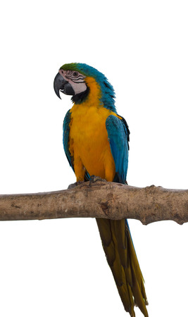 Colorful macaw birds, Parrot isolated on white background