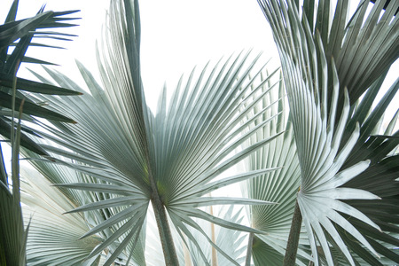 Green leaf of palm tree isolated on white background . Фото со стока