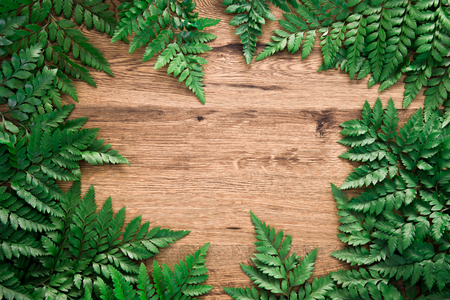 Tropical frame green davallia leaves nature on wood background with summer and spring concept, copy space, Top view, Flat lay.