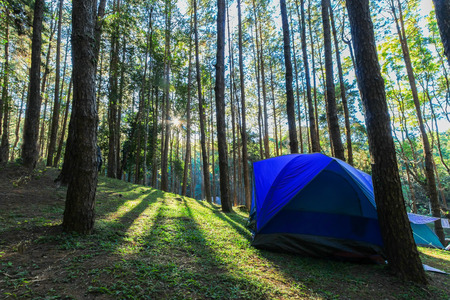 camping site: Camping site at pine plantations at sunrise