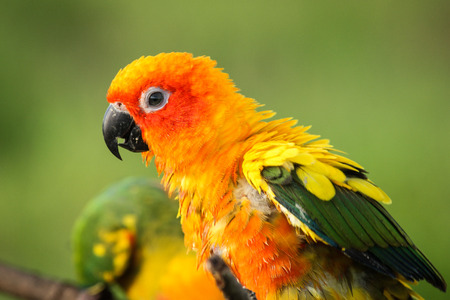 polly: Close-up of Parrot