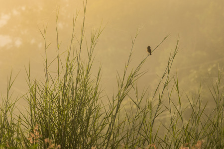 cried: little bird single watching something , hold on the branch sunlight cried in the morning