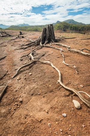 Driftwood art on Natures