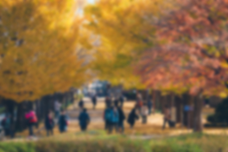 blurred background Two rows of ginkgo trees with many autumn yellow leaves falling on the ground. Photo taken in The Showa Memorial Park, Tokyo, Japan.