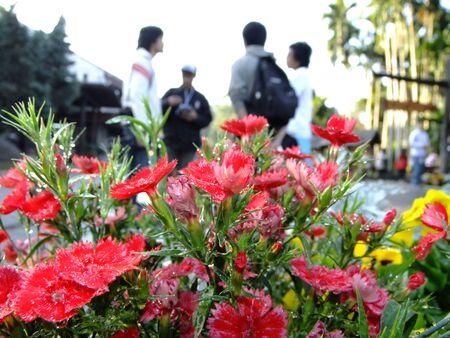 doi: Flower on Doi inthanon Stock Photo