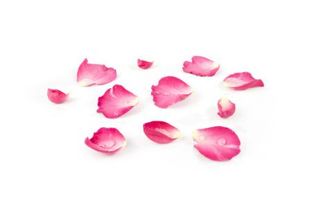 白い背景に分離されたバラの花びら 写真素材