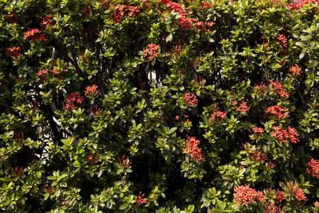 spike: The flower spike red spike
