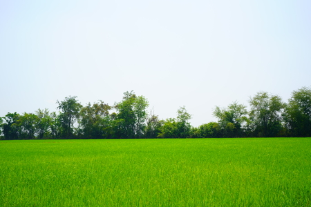 Wide Green grass and Sky