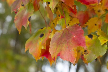 colorful leaves in Falls