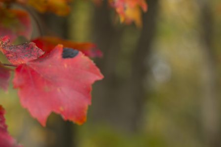 blurr leaves in falls backgroud