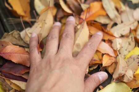 a hand on leaves Reklamní fotografie
