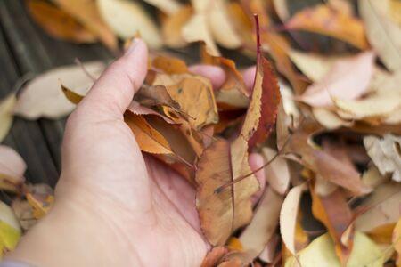 leaves full on a hand Reklamní fotografie