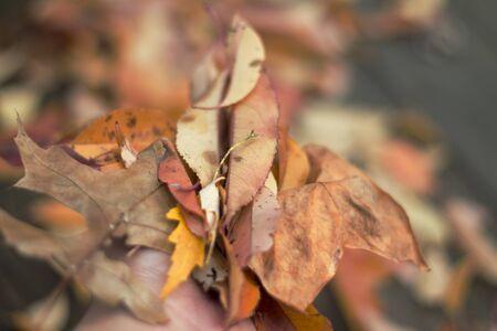 leaves full a hand