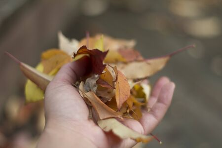 leaves in a hand