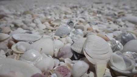 dry shells on the beach