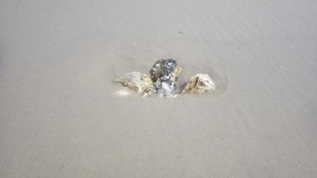 shell sea shore beach ocean