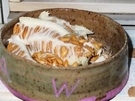 honey dew seeds Stock Photo