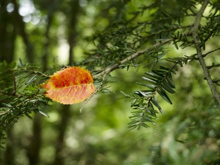 orange leaf on a branch Stockfoto