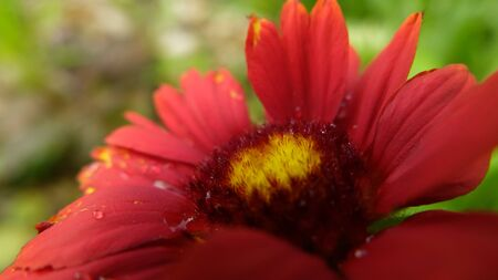 red flower Stockfoto - 131980387