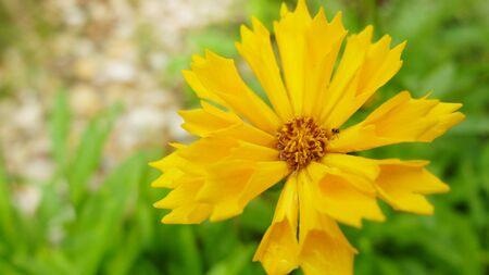 yellow flower Stockfoto