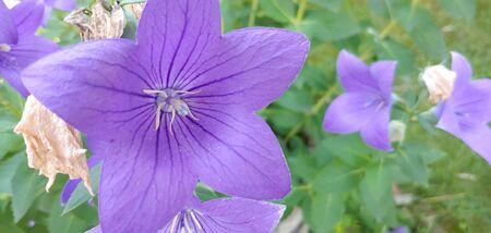 purple flowers in summer Stockfoto - 131980137