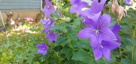 purple flowers in summer Stockfoto - 131980206