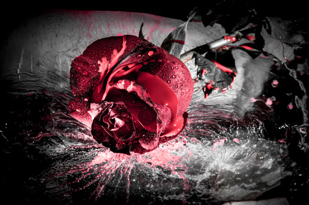 dark color: dramatic close up of a red rose on ice