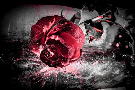 Dramatique près d'une rose rouge sur la glace Banque d'images - 33022792