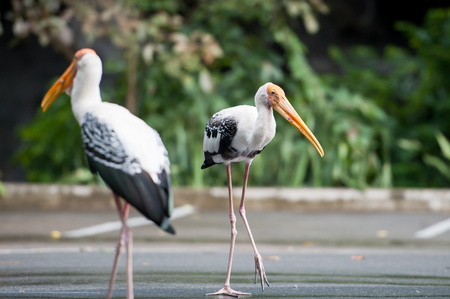 sitter: Painted Stork in the Zoo