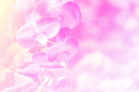 colorize: beautiful flowers made with color filters Stock Photo