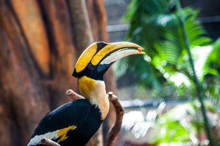 strikingly: Hornbill perched on a branch. in the zoo.