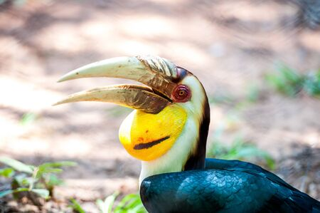 casque: Hornbill perched on a branch. in the zoo.