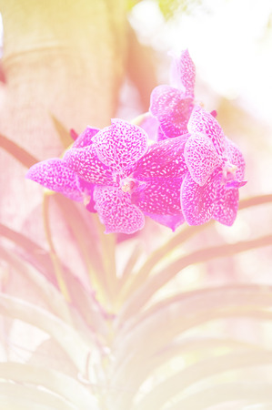 filters: beautiful flowers made with color filters Stock Photo
