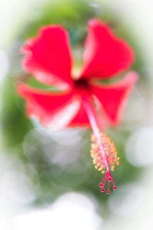 carpel: closeup carpel of a beautiful flower