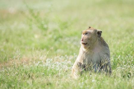 Image of monkey sitting on nature background.