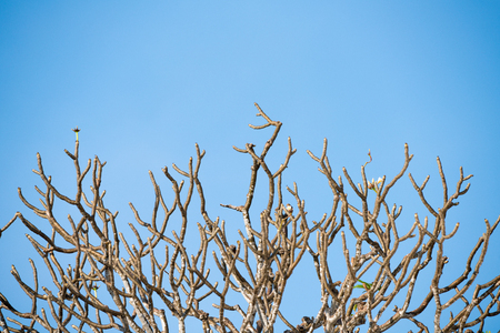 The trees are deciduous on the bright sky Stock Photo
