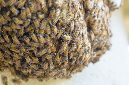 joint effort: bees swarming on a honeycomb