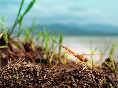 Dragonfly Stick branches background water sky Mountain