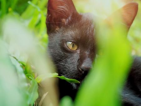 Kitten black Dodge the tree small Zdjęcie Seryjne